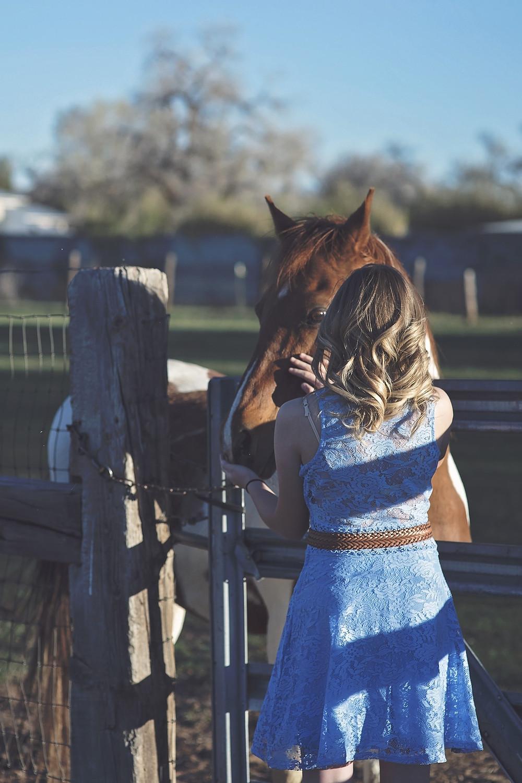 herbst pferd zweisamkeit