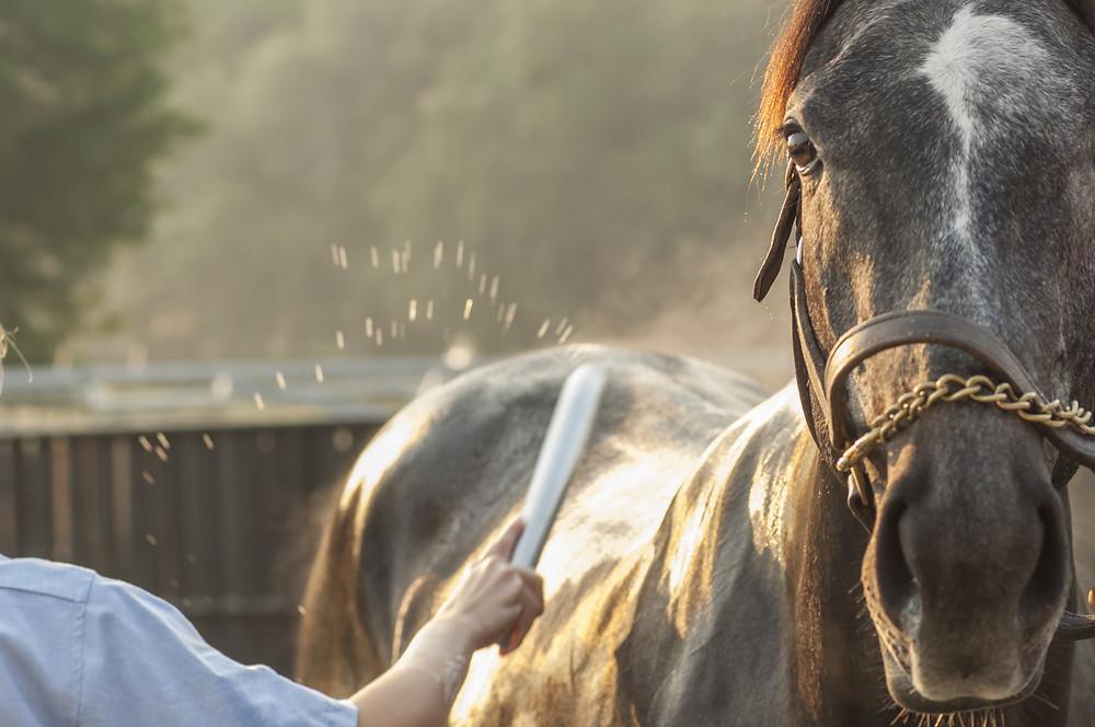 Pferd waschen Schweissmesser Wasser abziehen