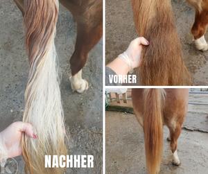Pferd waschen HorseWash Kikolily