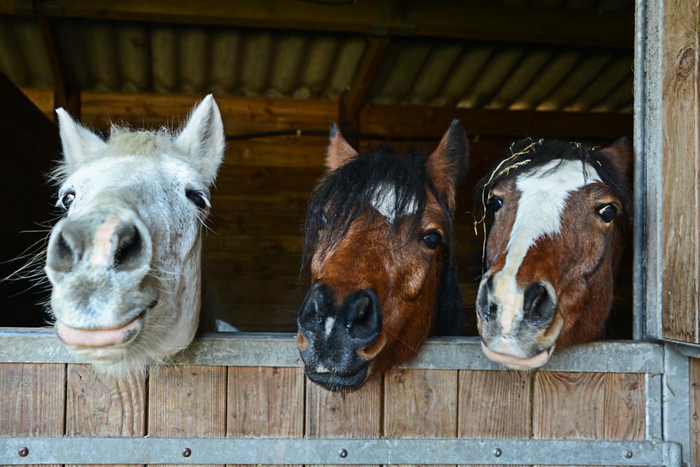 skin disease horse
