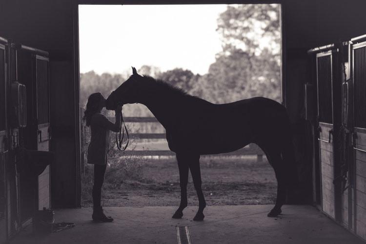Pferdehaut
