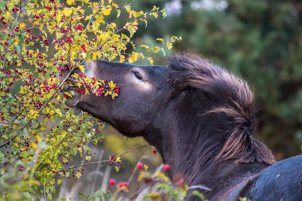selbsmedikation bei pferden