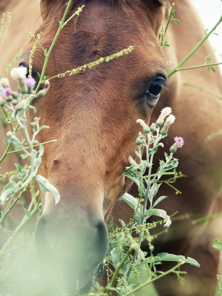 Super Welche Kräuter, Samen und Pflanzen dürfen Pferde fressen? @ZI_22