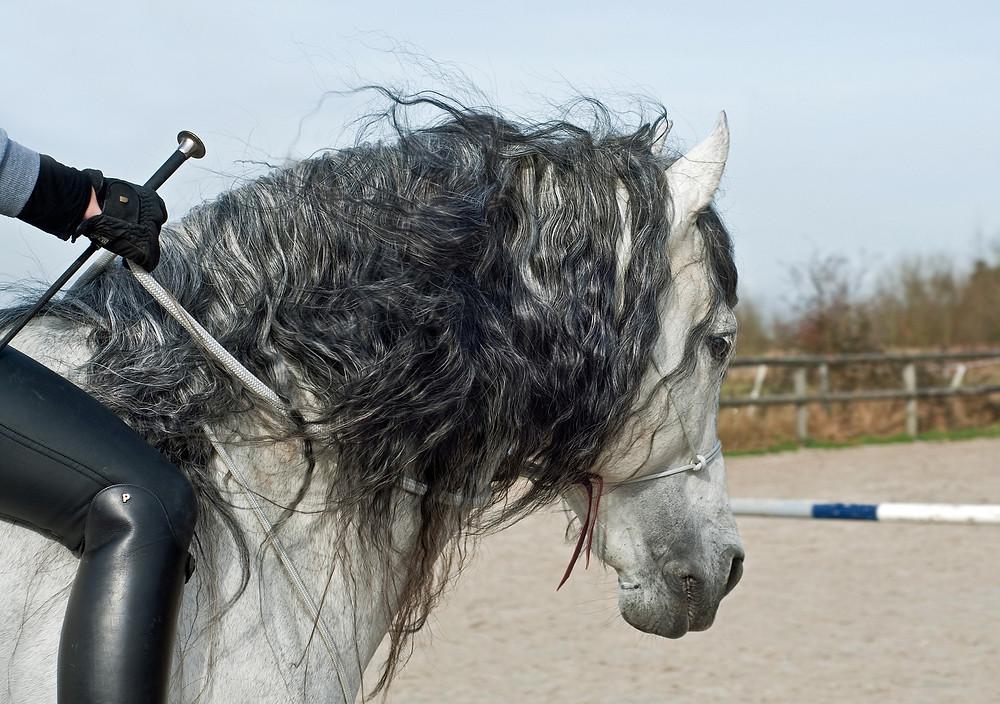 horse massage