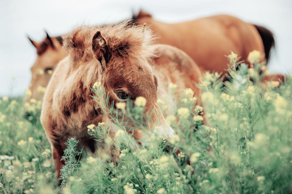 Kräuter Pferd Pferdefütterung