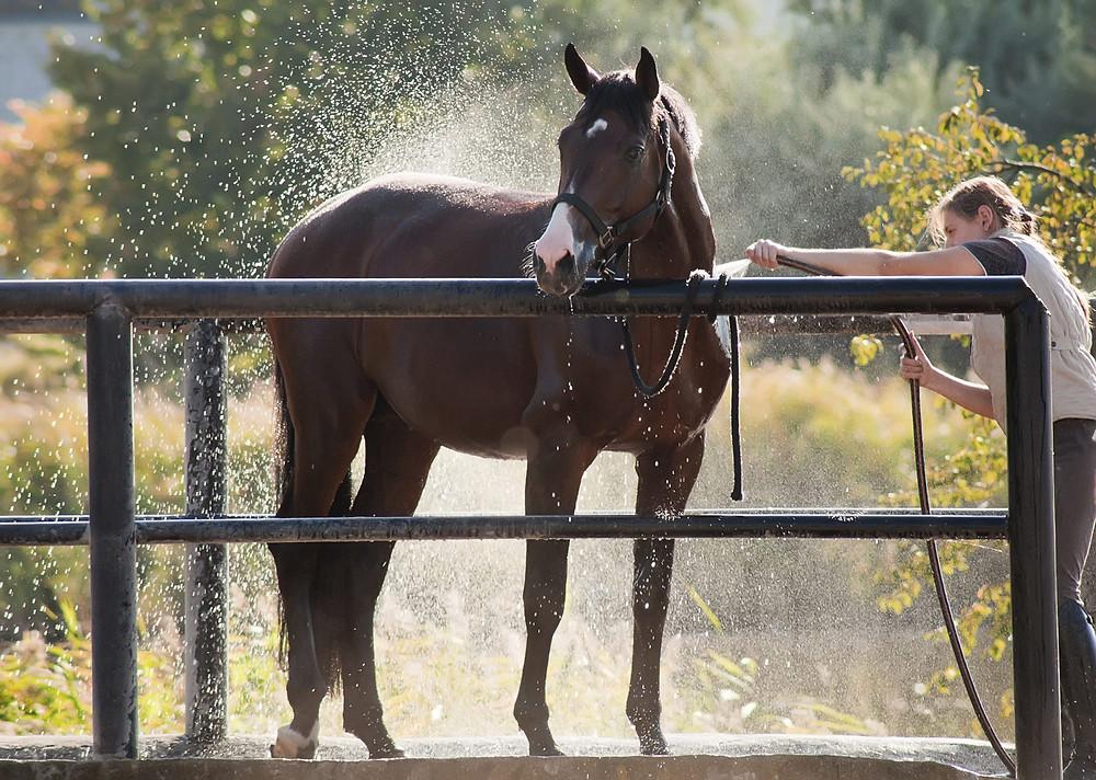 pferd waschen dusche