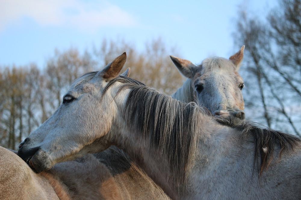 natürliche pferdepflege