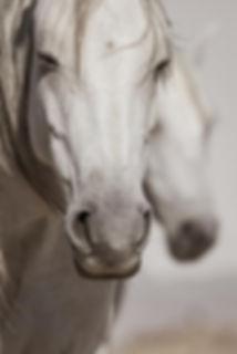 Pferde natürlich pflegen