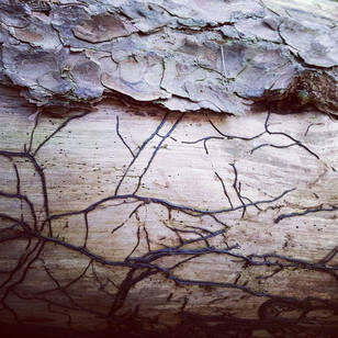 Clinging vine