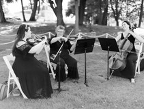 Which Group Should You Choose: The String Quartet or Trio?