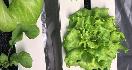Turkey: Increasing demand for smart indoor gardens