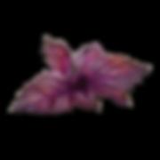 Purple-basil-edn-garden_cabc5d88-ec7b-4f