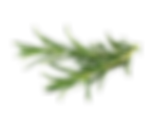 Rosemary-PNG-Transparent-Image.png