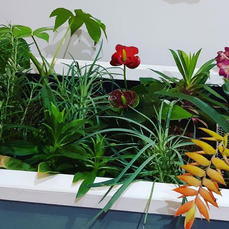 Nous avons testé ces plantes en aquaponie