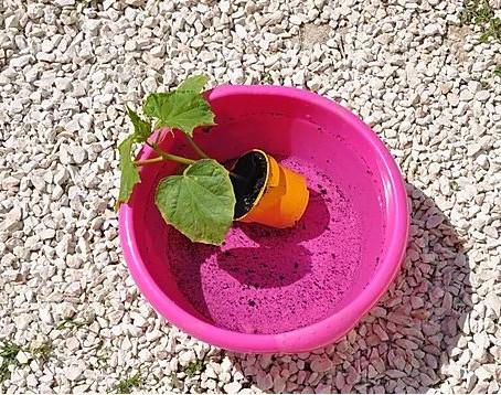 Planter des semis dans votre kit aquaponique