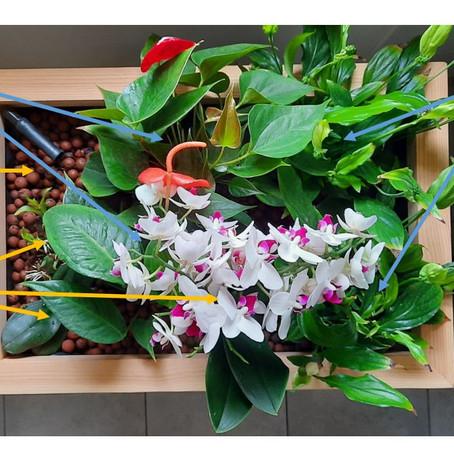 Bien débuter en aquaponie: Construire sa première composition végétale