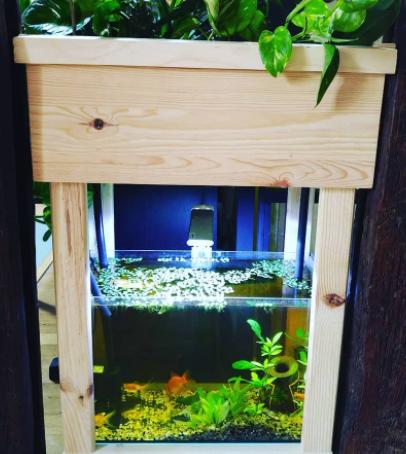 FAQ: Peut-on décorer la cuve pour les poissons?