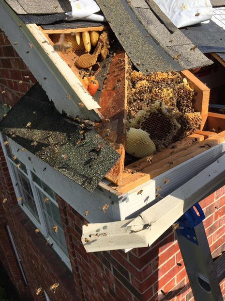 Bee Removal 2nd Story Roof.jpg