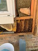 Houston TX Bee Removal.jpg
