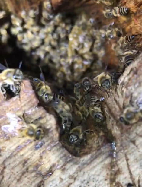 Honeybees up close.jpeg