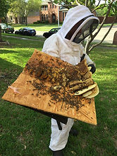 Farmers Branch Bee Removal