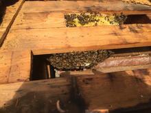 New Beehive in Roof.jpg