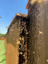 Frisco Fence Beehive