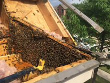 Residential Bee Removal.jpg
