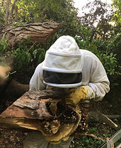 VIP BEE RESCUE BEE REMOVAL.jpg