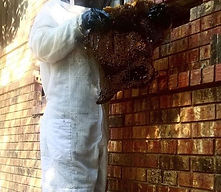 Beehive Behind Brick Wall.JPG