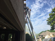 Fort Worth Bee Removal.jpg