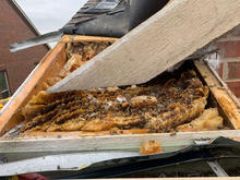 Removing Exterminated Hive.jpeg
