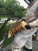 Richardson TX Bee Removal.jpg