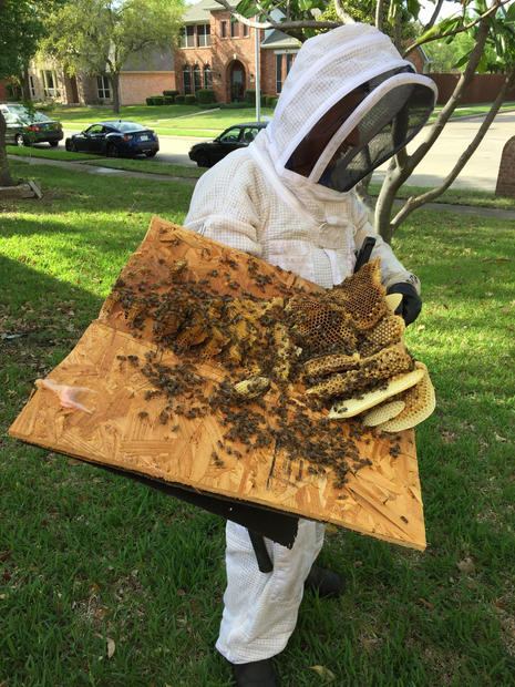 Plano Bee Removal.JPG