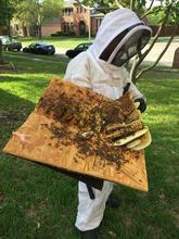 Plano Bee Removal.JPG