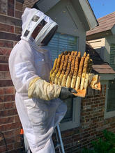 Beehive Removal Texas.jpg