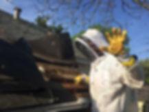 Bee Removal Dallas TX.jpg