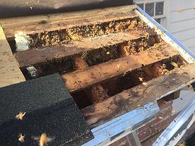Beehive in Roof.jpg