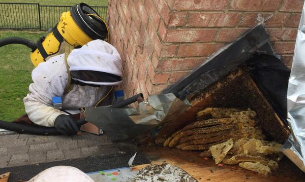 Roof Bee Rescue.jpg