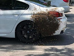 Bee Swarm on BMW.jpg