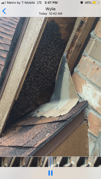 Bees In Roof.png