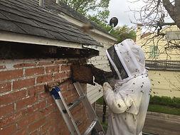 Dallas Bee Removal.jpg