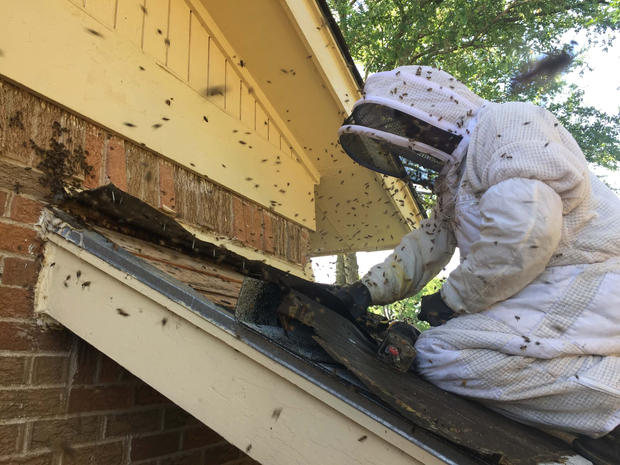 Aggressive Bees Bee Rescue.jpg