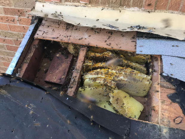 Richardson Bee Rescue.jpg