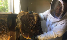Bee Removal Plano.jpg