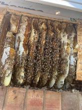 Beehive Activity.jpg