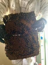 Beehive Brood.jpg