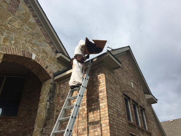 Frisco Bee Removal