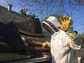 Bee Removal (1).jpg
