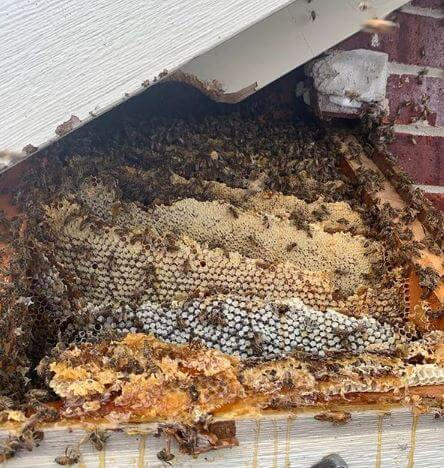 DeSoto Hive.jpg